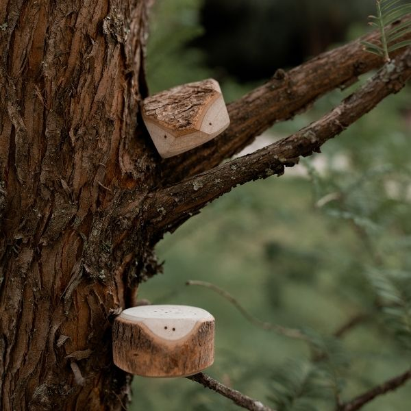 the-tree-creatures-let-them-play-toys